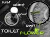 2__430x306_toilet-flower